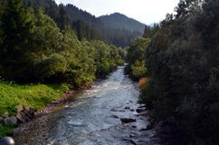 Stream that descends from the mountains Royalty Free Stock Images