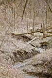Stream Down the Early Spring Gulley. A stream winds its way down the gully in the early spring stock images