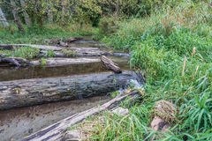 Stream And Driftwood 2. A stream flows over driftwood logs at Seahurst Beach Park in Washington State royalty free stock images