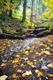 Stream with dry fallen leaves Royalty Free Stock Image