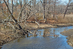 Stream in East Providence, Rhode Island Royalty Free Stock Images