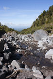 Stream, Egmont National Park Royalty Free Stock Photo