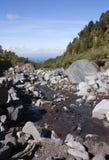 Stream, Egmont National Park Royalty Free Stock Photo