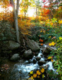 Stream in the fall Stock Image