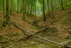 Stream and fallen trees in a forest stock image