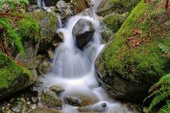 Stream falls down the creek Stock Photo