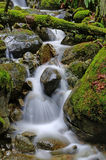 Stream falls down the creek Stock Images