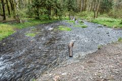 Park Stream. A stream at Flaming Geyser State Park in Washington State flows into the Green River Royalty Free Stock Images