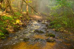 Stream flow through stones. Small river flow in forest sunrise with mist stock photography