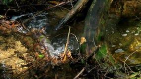 stream flow stock video footage