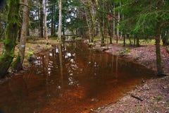 Stream flowing through Autumn Fall forest Stock Photos