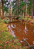 Stream flowing through Autumn Fall forest Stock Images