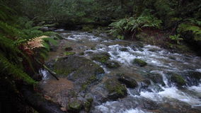 Stream Flowing Through Beautiful Forest. A stream tumbles noisily over rocks as it flows through a beautiful forest in northern California stock video