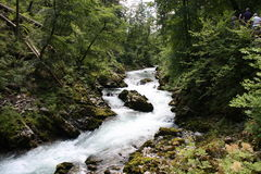 Stream flowing through the Blejski vintgar gorge in the forest, Slovenia.  Stock Image