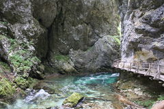 Stream flowing through the Blejski vintgar gorge in the forest, Slovenia.  Royalty Free Stock Photo