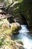 Stream flowing through the Blejski vintgar gorge in the forest, Slovenia.  Royalty Free Stock Photos