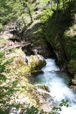 Stream flowing through the Blejski vintgar gorge in the forest, Slovenia.  Royalty Free Stock Images