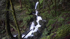 Stream Flowing Through California Forest. A stream tumbles noisily over rocks as it flows through a beautiful forest in northern California stock video footage