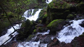 Stream Flowing Through California Forest. A stream tumbles noisily over rocks as it flows through a beautiful forest in northern California stock footage