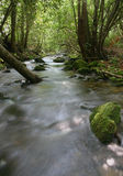 Stream flowing through forest Stock Photo