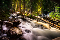 Stream Flowing in Forest Stock Photography