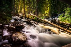 Stream Flowing in Forest Stock Photo