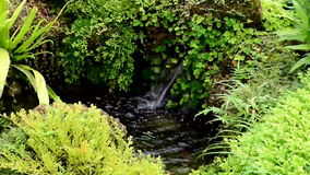 Stream flowing fresh water. Ornamental garden stream flowing fresh water stock footage
