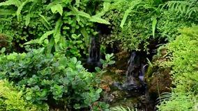 Stream flowing fresh water. Ornamental garden stream flowing fresh water stock video footage