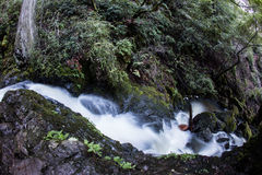 Stream Flowing Through Green Forest Royalty Free Stock Photos