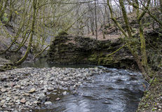 Stream flowing through Healey Dell Nature Reserve Royalty Free Stock Photo