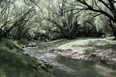 Stream flowing through land between arching willow trees. Wandering stream flowing through farmland between bright green leaves of arching shady willow trees stock photo