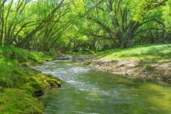 Stream flowing through land between arching willow trees. Wandering stream flowing through farmland between bright green leaves of arching shady willow trees stock photos