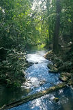 Stream flowing in lush tropical forest Stock Photo