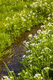 Stream flowing through the meadow Royalty Free Stock Photo