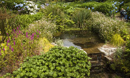 Stream flowing over steps at Trebah Gardens,Cornwall Royalty Free Stock Photos