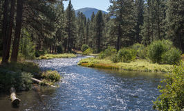 A stream flowing through a pine forest. The Metolius River flowing through Ponderosa forest in the central Oregon Cascade Range Stock Photo
