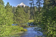 A stream flowing through a pine forest with snow capped mountain. The head of the Metolius River flowing through Ponderosa forest in the central Oregon Cascade Stock Photography