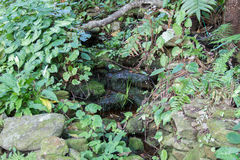 Stream flowing in rainforest Royalty Free Stock Photo