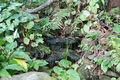 Stream flowing in rainforest Royalty Free Stock Photography