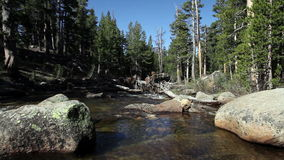 Stream Flowing Between Rocks And Trees Yosemite. Yosemite Park California River With Rocks And Trees stock footage