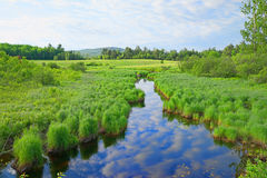 Stream flowing through rural Maine. A slow moving stream flowing through the rural countryside of Maine in the summertime Royalty Free Stock Photos