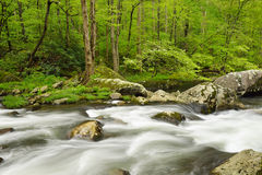 Stream flowing through verdant forest. Stock Photo