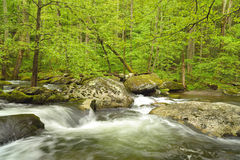 Stream flowing through verdant forest. Royalty Free Stock Photo