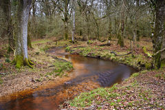 Stream flowing through Winter Autumn Fall forest Stock Photo