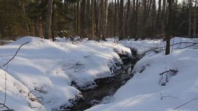 Winter stream. Stream flowing in a winter forest stock footage