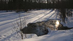 Winter lake. Stream flowing into the winter lake among fir forest stock video