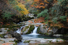 Stream flowing through woods. Stream cascading over mossy rocks in colorful Autumn forest Stock Photos