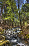 Stream Flows Around Tall Trees. A stream flows downward between tall evergreen trees Stock Photo