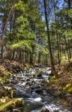 Stream Flows Around Tall Trees Stock Photo