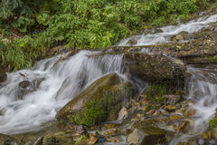 The stream flows through the bushes and rocks Stock Photos